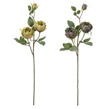 Assorted Green/Purple Cabbage Rose Stem By Ashland