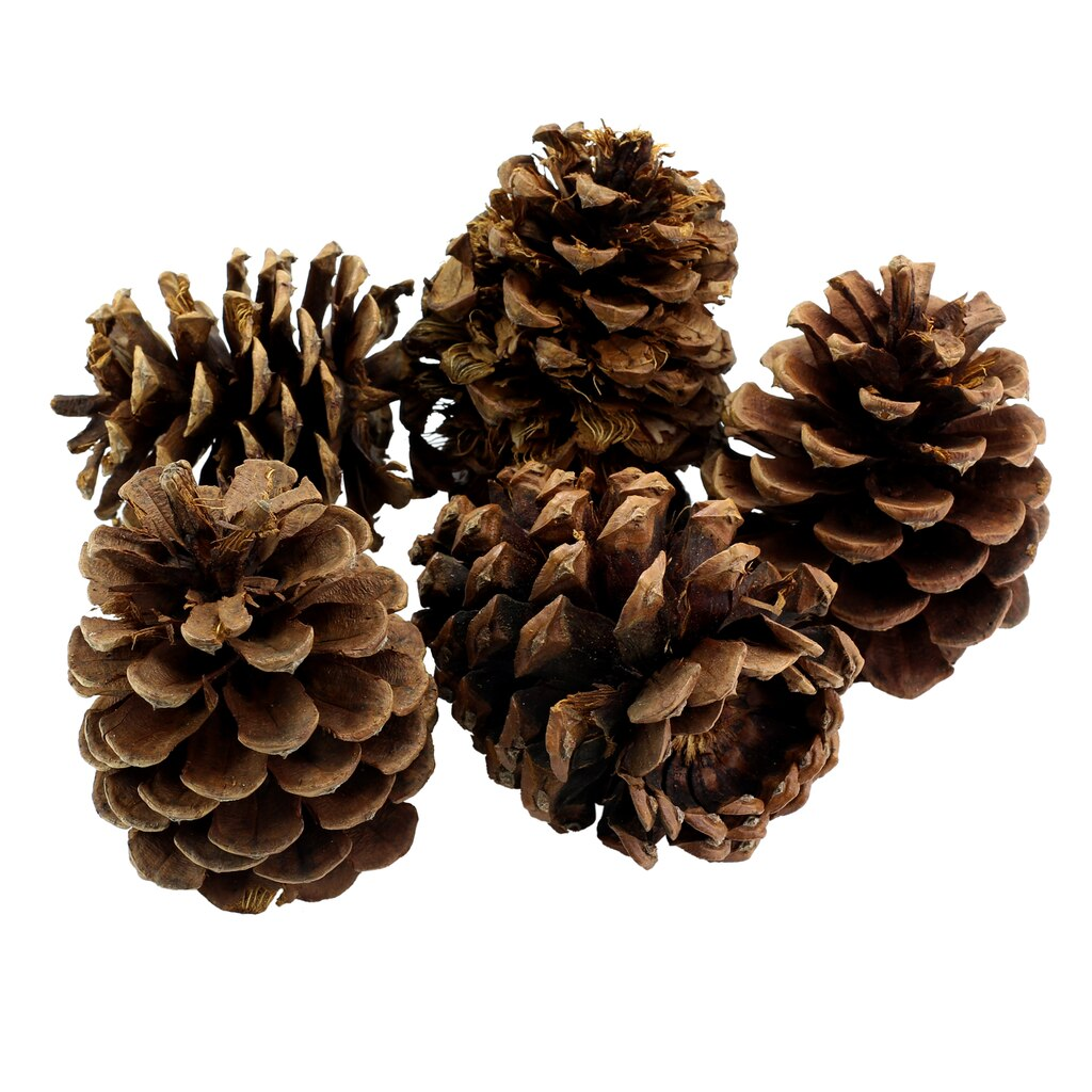 Buy the scented large pinecones by ashland at michaels for Large pine cones